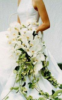 a99587_fal02_orchidcvr_xl
