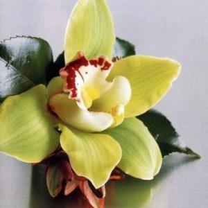 butoniera-s-orhideq