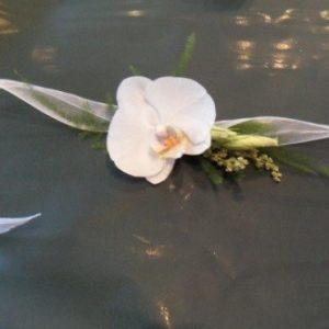 grivna-za-raka-s-falenopsis