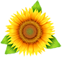 Магазинът за Цветя - sunflower-bg.com ⚘